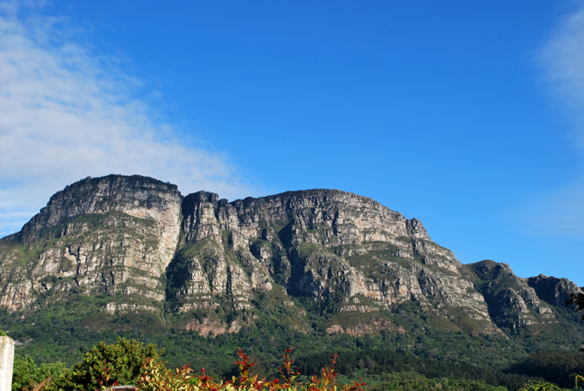 Panoramic view on bright sunny day showing the east side of Table Mountain in the distance under pale blue sky and the evergreen Newlands forest at the mountain base.