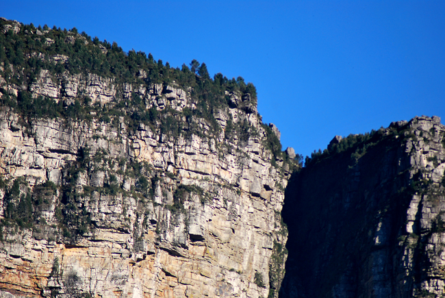 Closer view of the tops of the Fernwood and Protea buttresses in clear sunlight showing tall trees  on top and craggy sandstone layers below.